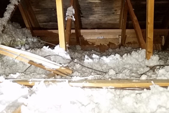 Mold-Removal-in-the-Attic