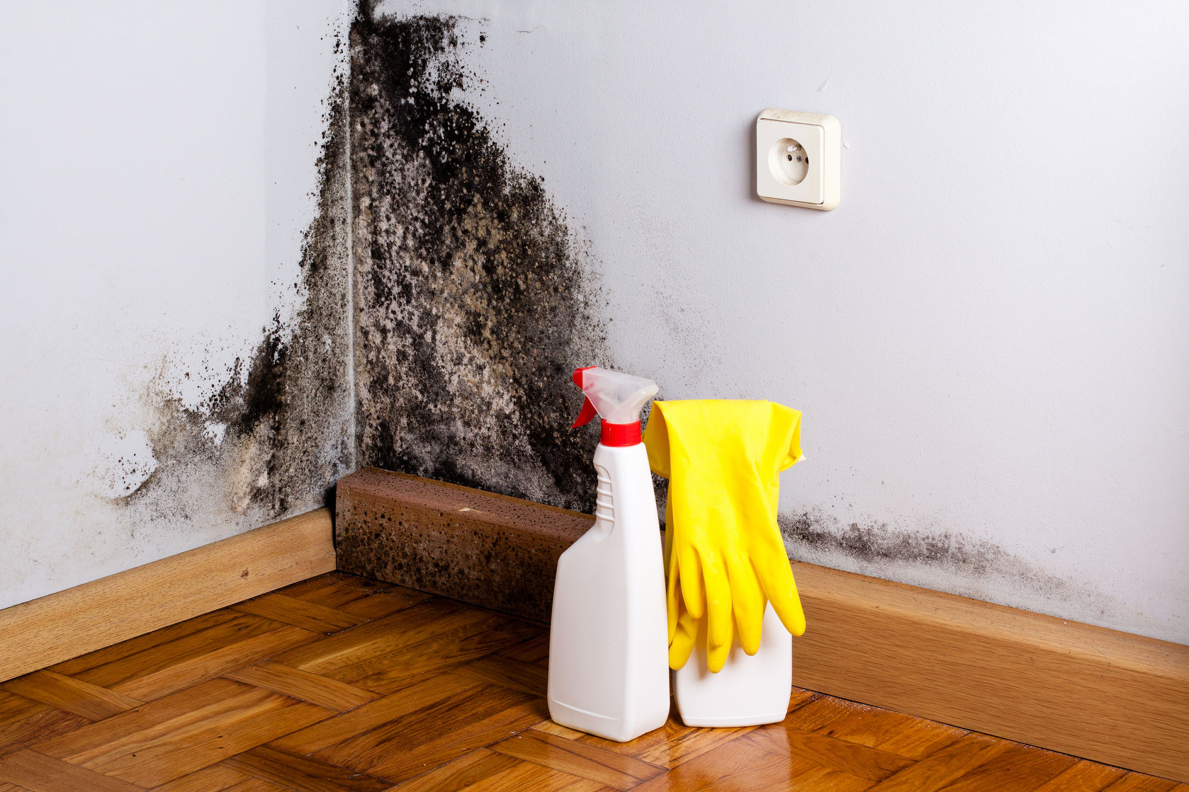 The 10 Steps To Mold Remediation